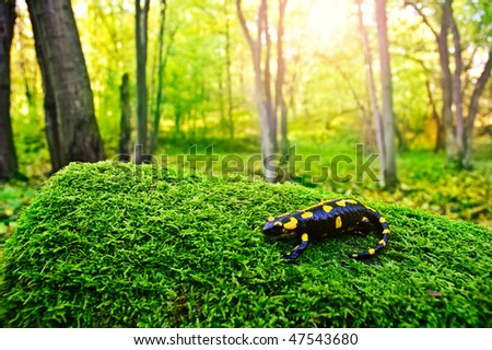 Salamander - stock photo