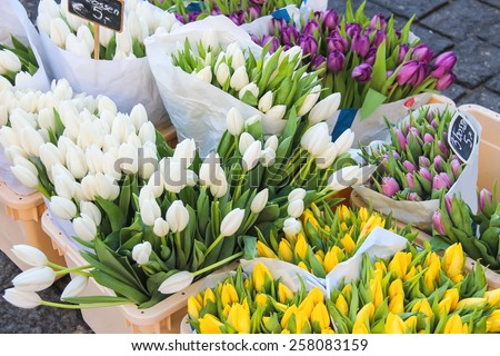Sale of tulips in the Dutch market. - stock photo