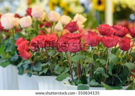 Sale of tulips in the market. - stock photo