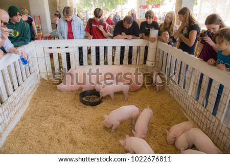 people meet piglets mother