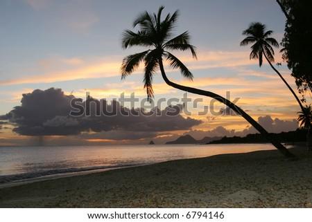 Salines beach, Martinique - stock photo