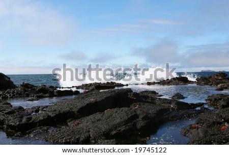 Sally Lightfoot crabs run on volcanic rocks as giant waves crash ashore - stock photo