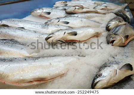 Salmon fish at the market for sell - stock photo