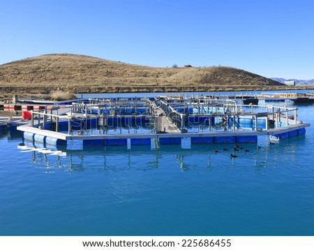 Salmon Fish farm floating on the glacial waters of Wairepo Arm, Twizel, South Island, New Zealand. - stock photo