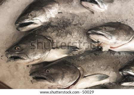 salmon for sale over ice