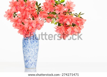 Salmon pink flowering azalea branch in a mottled blue and white vase on reflective surface with copy space. - stock photo