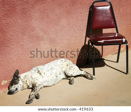 Saloon Dog - stock photo
