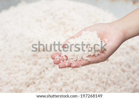 Salt collecting in salt farm