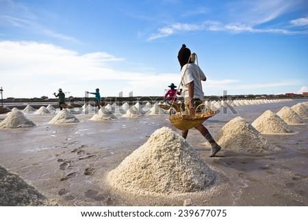 salt : sea salt fields in thailand - stock photo