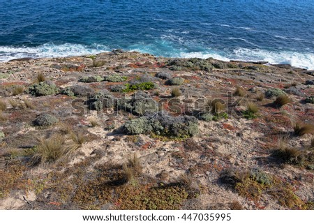 Salt tolerant plants and grass growing on south-west coast, part of Flinders Chase National Park on Kangaroo Island, South Australia  - stock photo