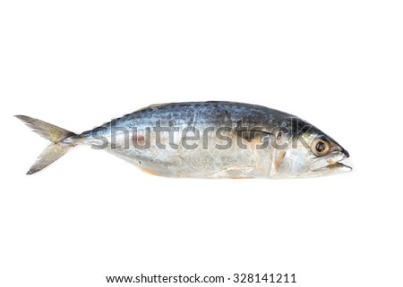 Salted mackerel isolate on white background
