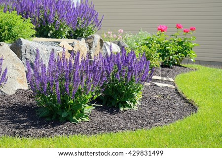 Salvia Flowers and Rock Retaining Wall at a Residential Home - stock photo