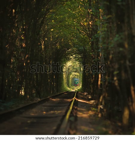 Same Train running in Natural tunnel of love formed by trees - stock photo