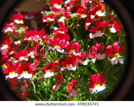 Sample photo of flowers to demonstrate lens distortion and chromatic aberration.