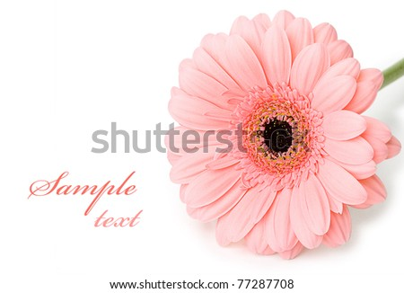 Sample text and flower