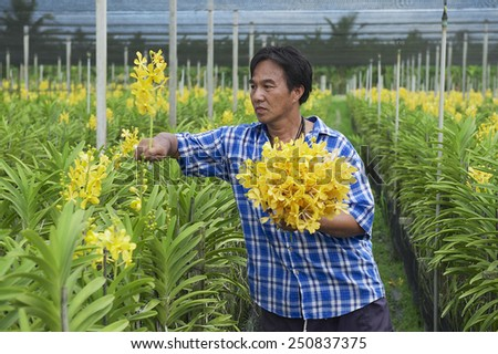 SAMUT SONGKRAM, THAILAND - MAY 22, 2009: Unidentified man works at the orchid farm  on May 22, 2009 in Samut Songkram, Thailand. - stock photo