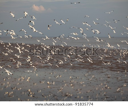 SAMUTPRAKAN, THAILAND - JANUARY 2 : Siberian red mouth seagulls visited Thailand from cool climate  on Jan 2, 2012 at Bangpoo Recreation Club in Samutprakan, Thailand - stock photo