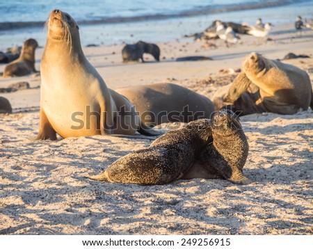 San Crisobel island - Galapagos National Park South America - stock photo