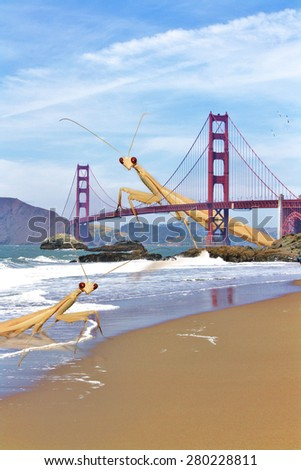 San Francisco Golden Gate Bridge is being Taken Over