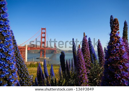 San Francisco Golden Gate framed by Purple Flowers - stock photo