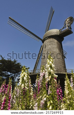 SAN FRANCISCO, USA - AUGUST 13 2013: San Francisco Dutch Windmill, Located on the western edge of Golden Gate Park, with colorful flowers - stock photo