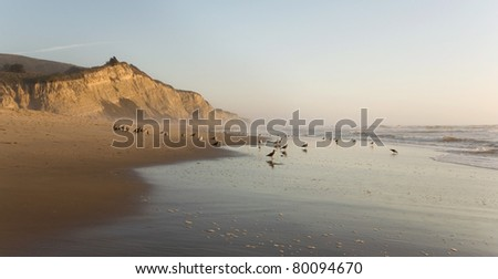 San Gregorio Beach and cliffs, California State Beach and Wildlife Preserve, at sunset with birds - stock photo