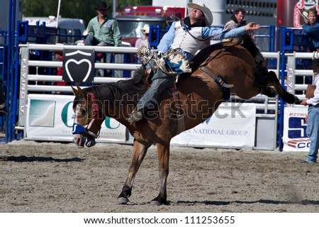 Cody Wyomingjuly 4 A Mule Train Stock Photo 80989633