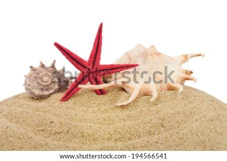 Sand and seashells over white - stock photo