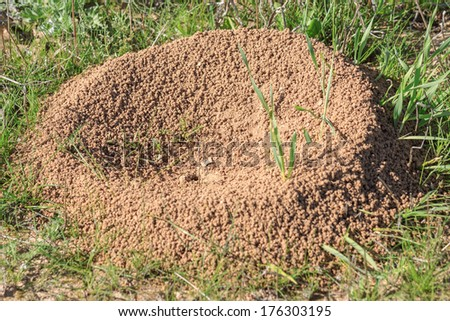 Sand anthill on a grass in the desert - stock photo