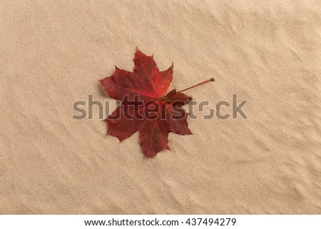 Sand background with autumn leaves. The leaf are on the centre. - stock photo