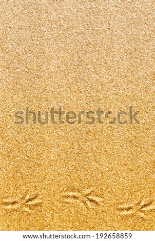 Sand background with bird traces - stock photo