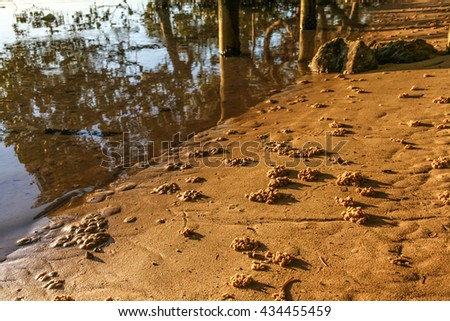 Sand balls on top of soldier crab burrows near mangroves on salt water lake edge. Australia. - stock photo