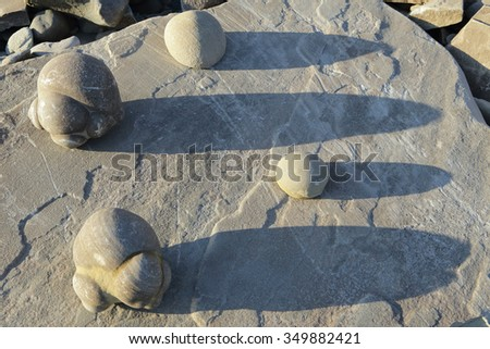 Sand concretions on the banks of the Lena River. Yakutia. Russia.