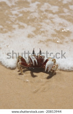 sand crab on the beach - stock photo