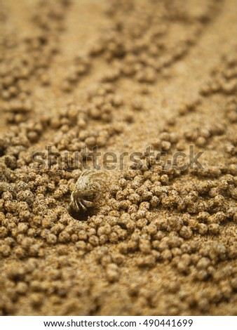 Sand crab tends its hole (focus on crab)