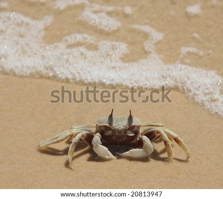 sand crab with waves background - stock photo