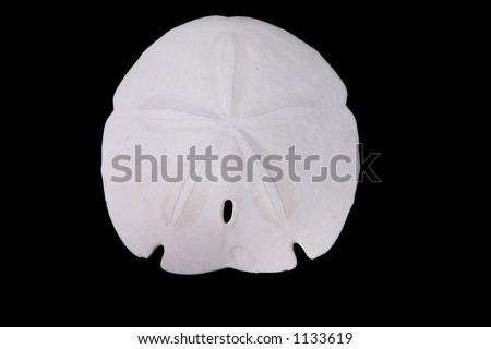 Sand dollar isolated over black - stock photo