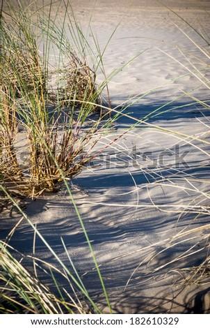 Sand-drift, trees and grass at kootwijkerbroek, netherlands - stock photo