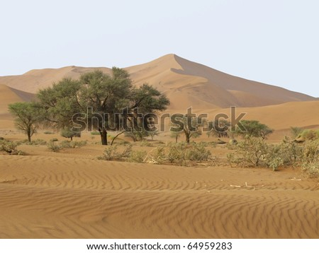 Sand Dune in Namib-Nauktuft National Park Namibia - stock photo