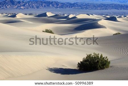Sand Dune . National park Death valley - stock photo