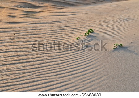 Sand Dune ripples at sunset - stock photo