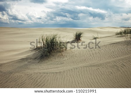 Sand dune. Sparse vegetation of sand dunes on the Curonian Spit - stock photo