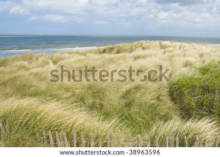 Sand dunes along the Belgian coast - stock photo