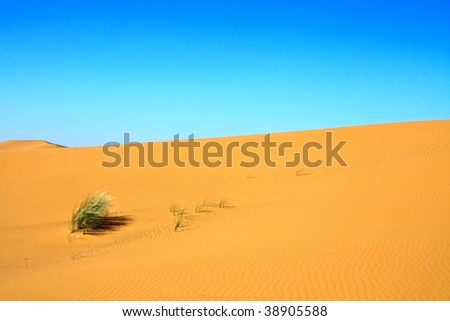 sand dunes and a lonely tuft of grass - stock photo