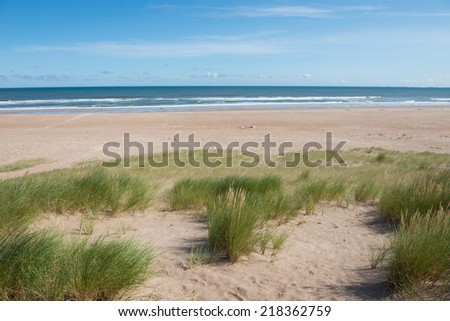 Sand dunes and grass , Northumberland ,England - stock photo