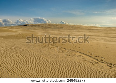 Sand dunes and ocean at sunset - stock photo