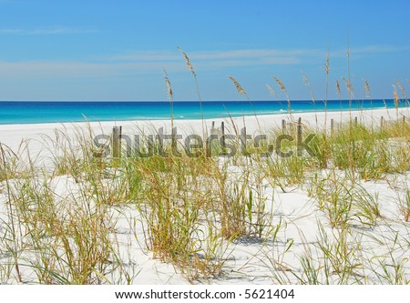 Sand Dunes and Sea Oats by Beautiful Ocean - stock photo