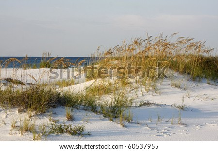 Sand Dunes and Sea Oats on the Gulf of Mexico - stock photo