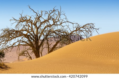 Sand dunes and shadows in a desert landscape. Increase in the areas of deserts. Dead trees.