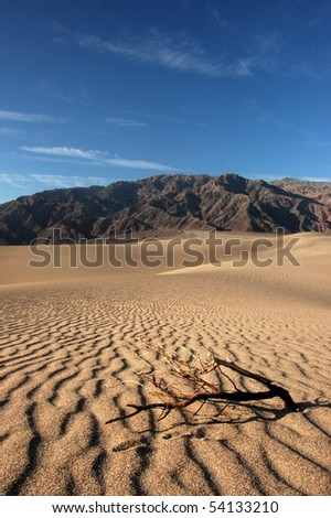 Sand dunes in Death Valley with dry branch in the foreground